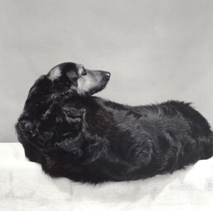 Muffin by Robert Mapplethorpe